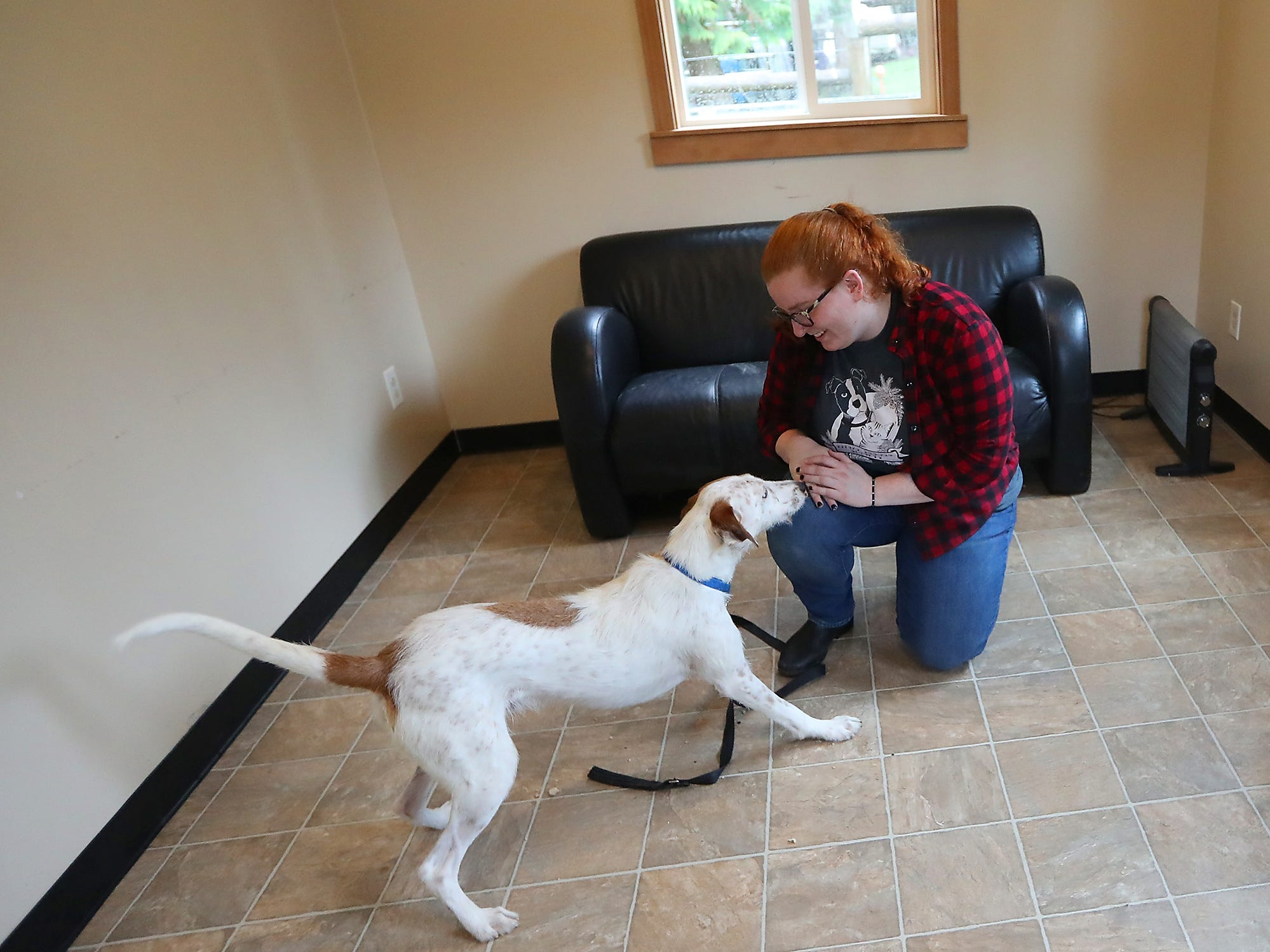 Behavior assistant Emily Sanders works with Sam, a whippet/airedale mix that is ready for adoption, in the Relax Room at the Kitsap Humane Society in Silverdale on a rainy Friday, February 1, 2019.