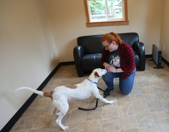 "Kitsap Humane Society behavior assistant Emily Sanders works with Sam, a whippet/Airedale mix that is ready for adoption, in the ""Relax Room"" at the Kitsap Humane Society in Silverdale. As the humane society undergoes a renovation and expansion, it has notched its highest-ever ""save rate."""