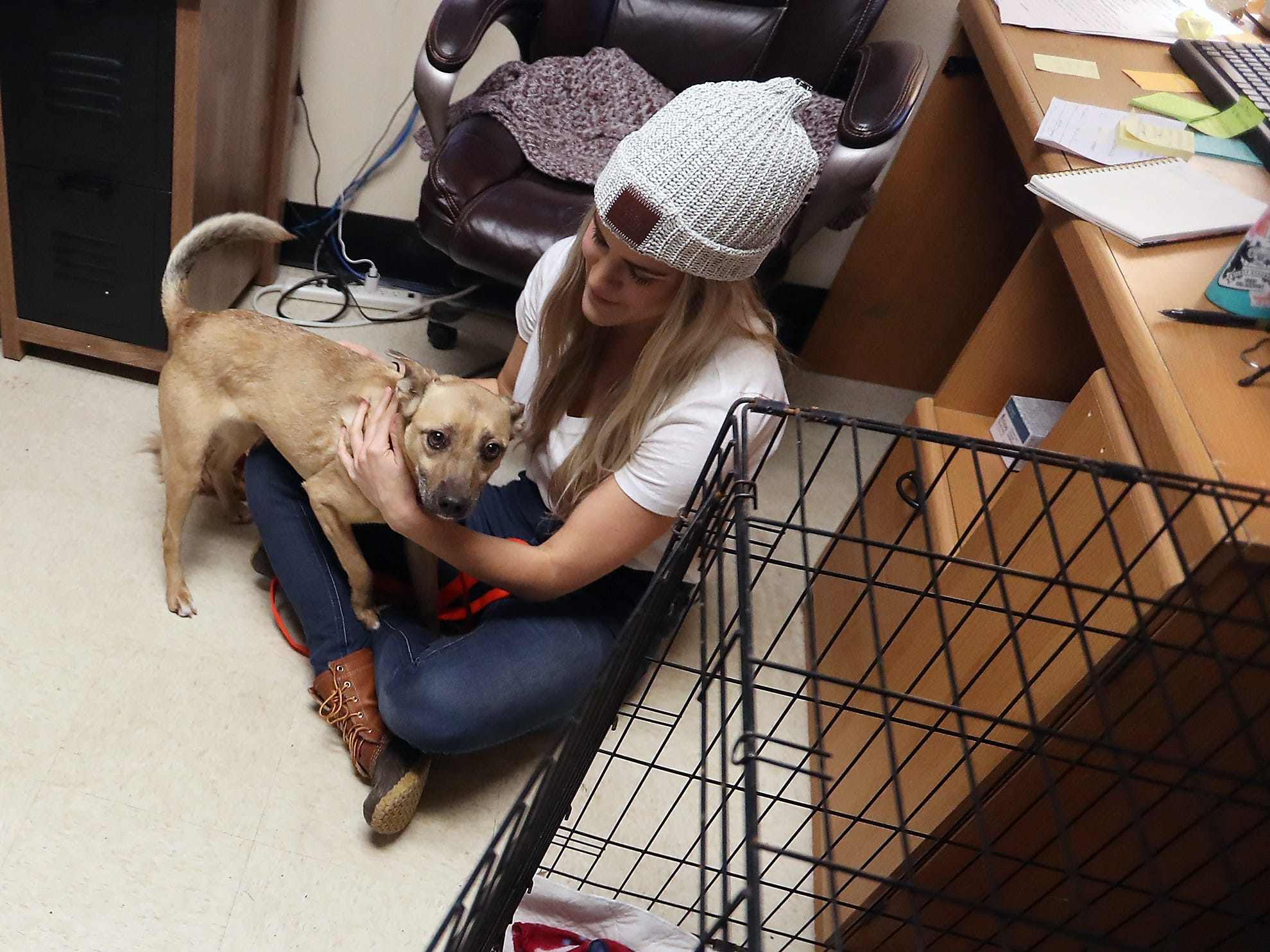 Eli crawls into the lap of adoption coordinator Ashley Cipolletti while spending some time in Cipolletti's office at the Kitsap Humane Society in Silverdale on Friday, February 1, 2019. Eli has been at the shelter for 40 days and the relaxing atmosphere of Cipolletti's office, as well as the outings away from the shelter, have helped Eli come out of his shell and show off his loving personality.