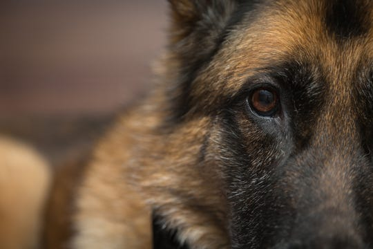 A German shepherd was rescued from the bitter cold on Thursday. The dog was spotted outside a Camden business.