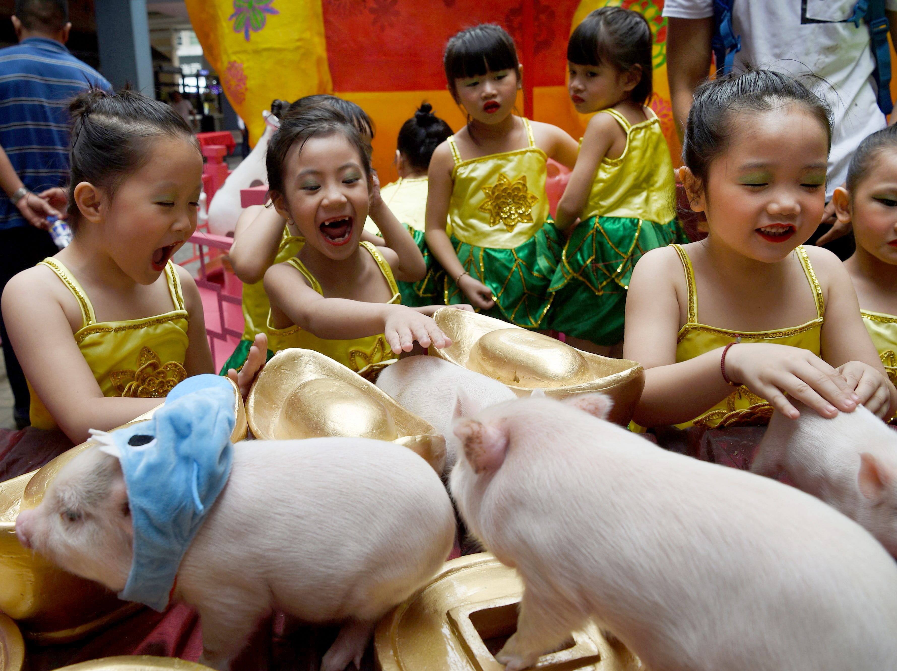 Children touch piglets during a ceremony as part of celebrations ahead of the Chinese Lunar New Year of the Pig at a mall in Chinatown district of Manila on February 1, 2019.