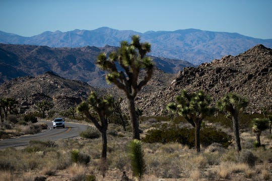FILE - In this Jan. 10, 2019, file photo, a car drives along the road at Joshua Tree National Park in Southern California's Mojave Desert. National parks across the United States are scrambling to clean up and repair damage that visitors and storms caused during the recent government shutdown while bracing for the possibility of another closure ahead of the busy Presidents Day weekend later this month. (AP Photo/Jae C. Hong, File)
