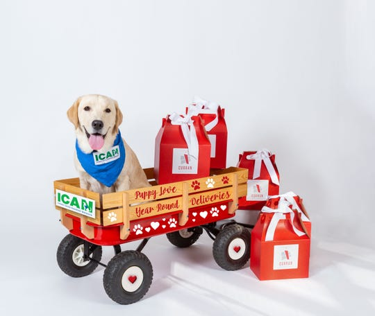 Service dogs in training with Indiana Canine Assistant Network will deliver special Valentine's Day gifts Feb. 13-14 to raise money for training programs.
