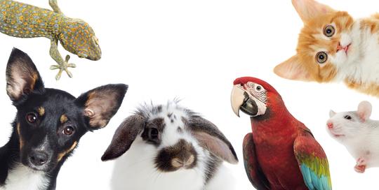 Knox News Sentinel's pet photo contest