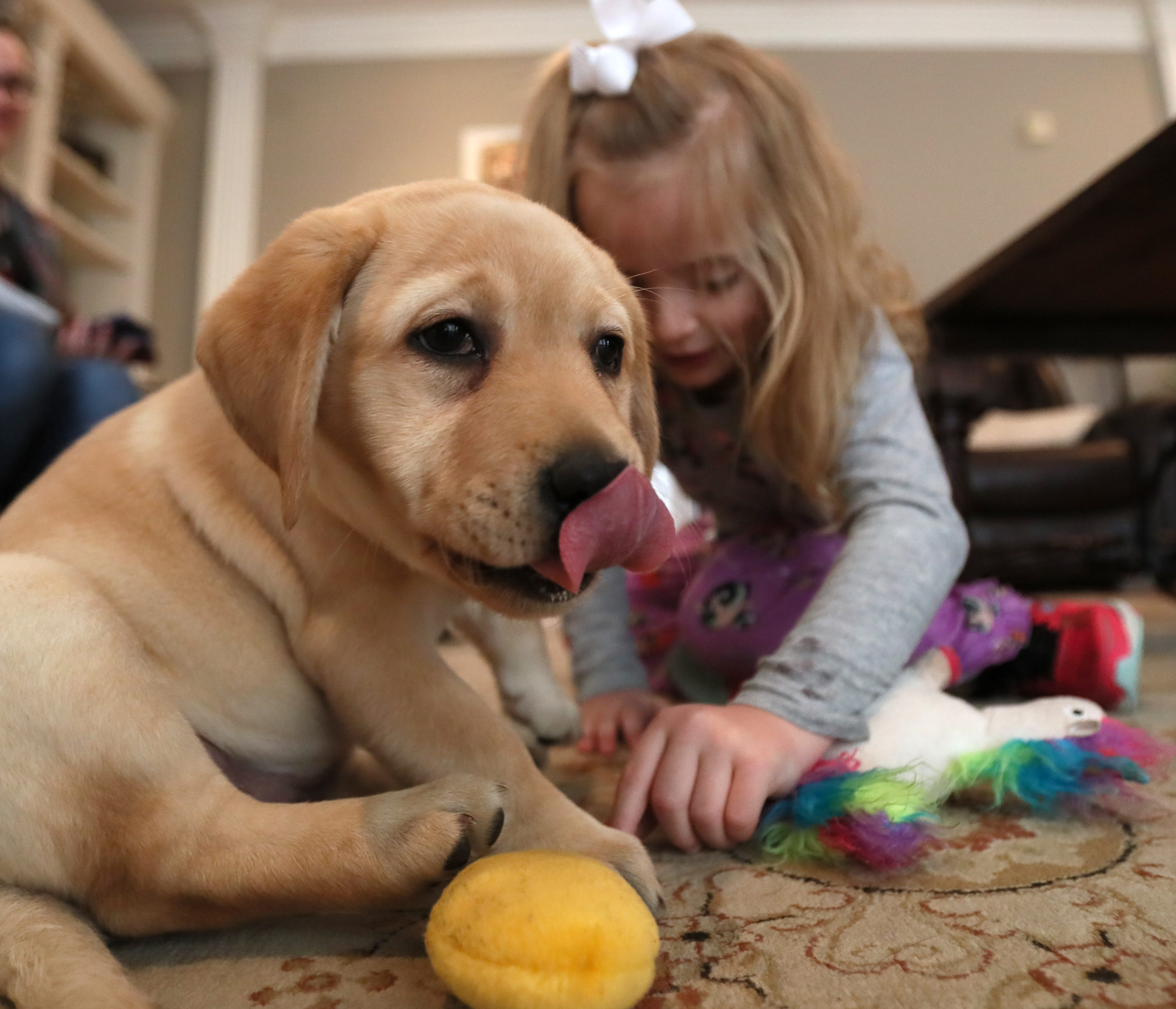 Arlington girl gets her service puppy after community raises $10,500 | The Commercial Appeal