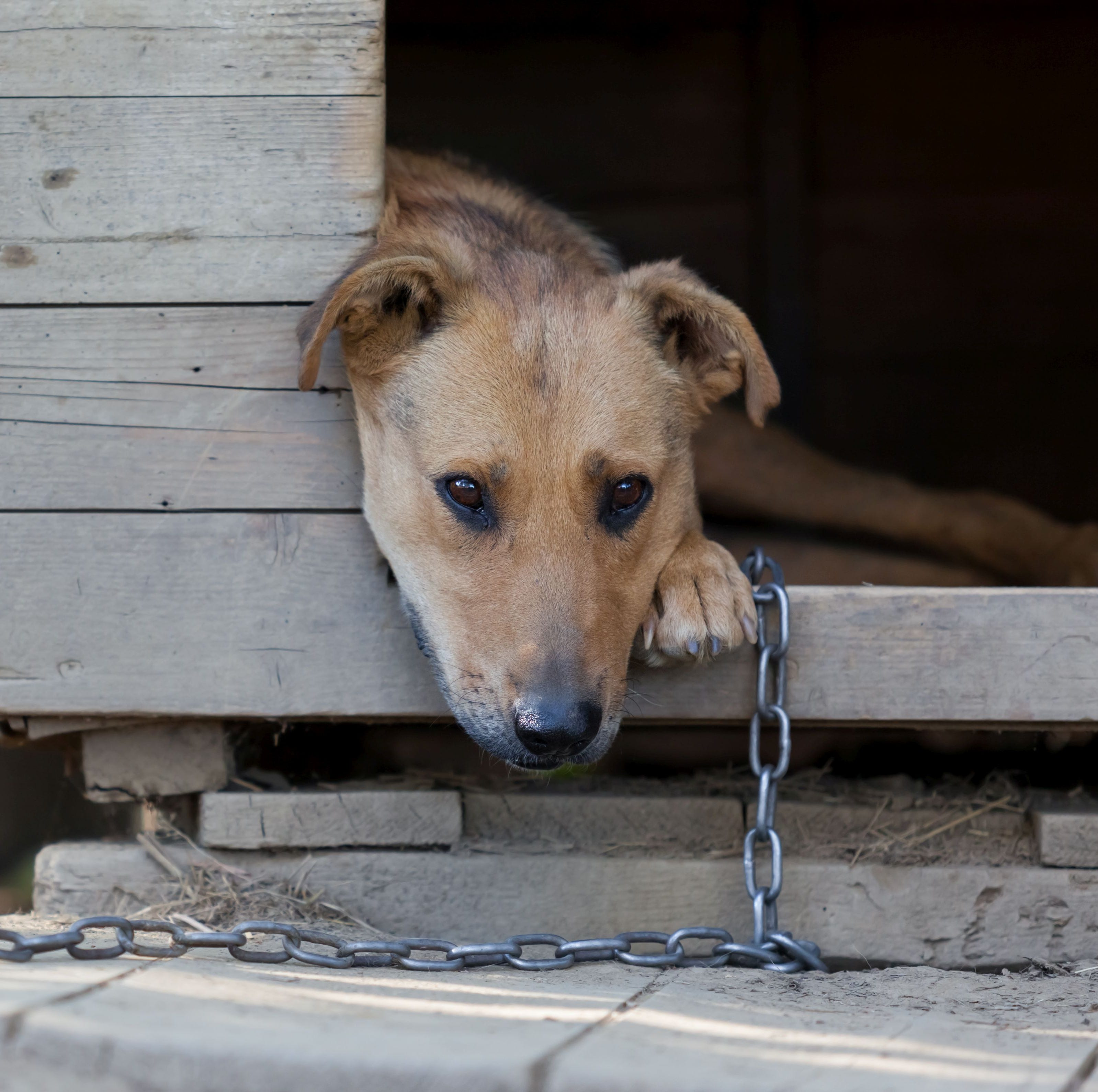 Alabama city makes it a crime to leave your dog chained up outside