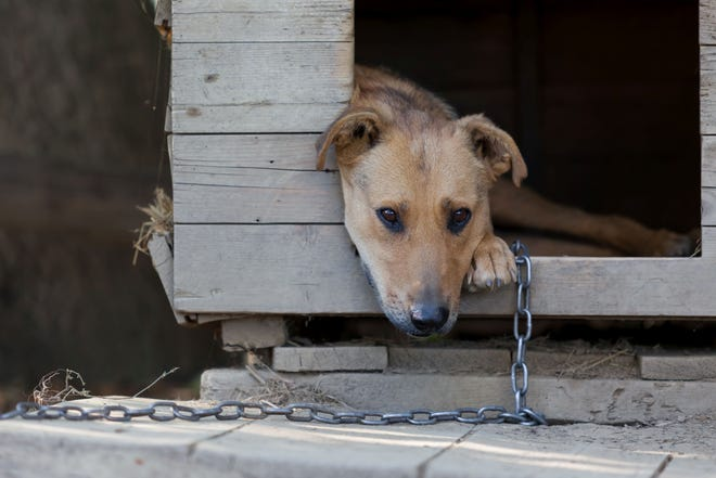 A change in Prattville's anti-animal cruelty law has banned tethering dogs in any situation.