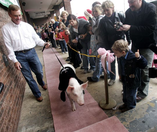 Wilbur the pig is led down the pink carpet by his owner John Batey for a special showing of Charlotte's Web at the Pemiere 6 theatre in Jackson Heights Plaza, Dec. 21, 2006.