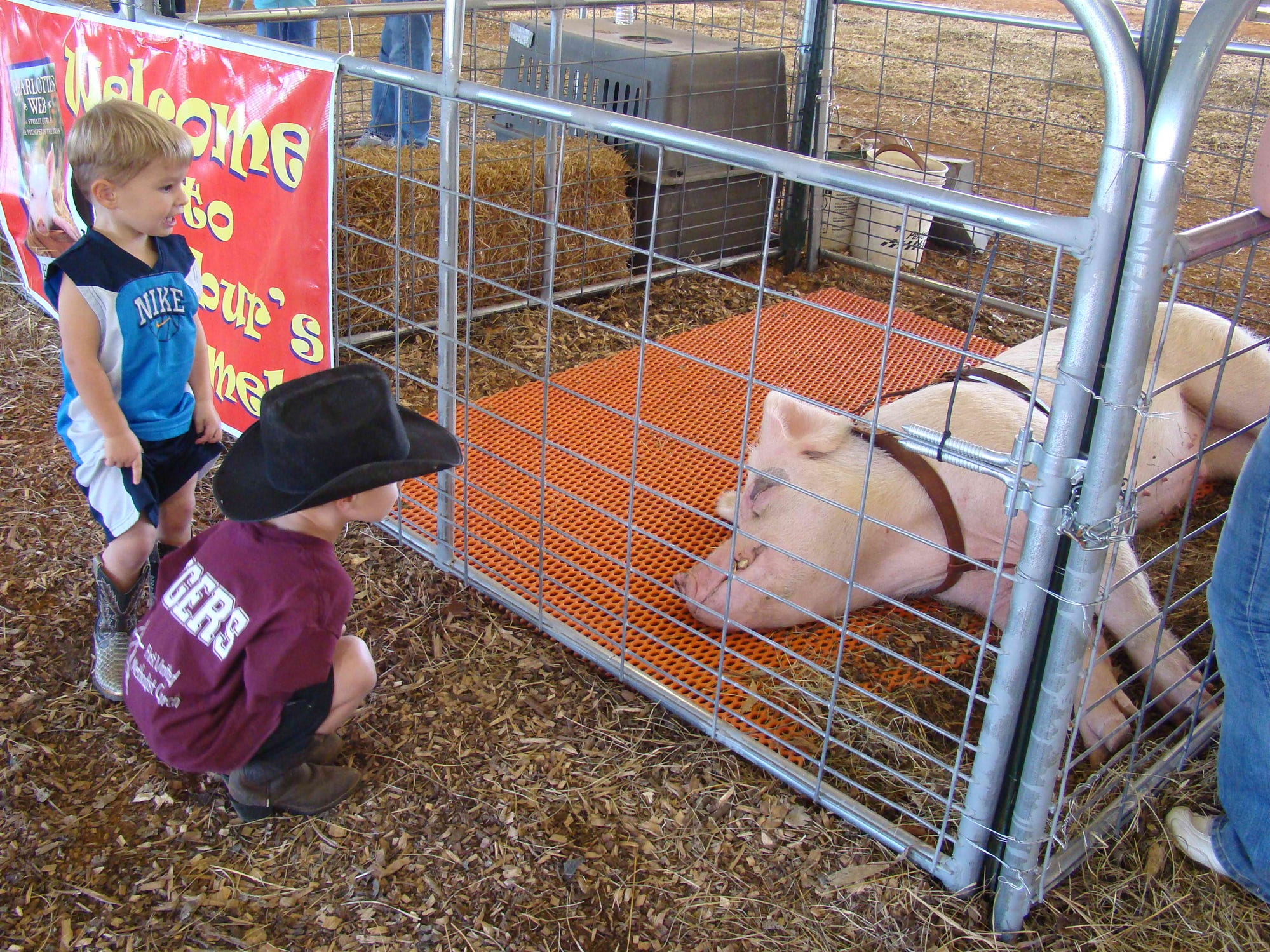 Wilbur the Pig takes a nap while these pint-size onlookers get a peek at the famous porker at last year?s Adventures in Agriculture.