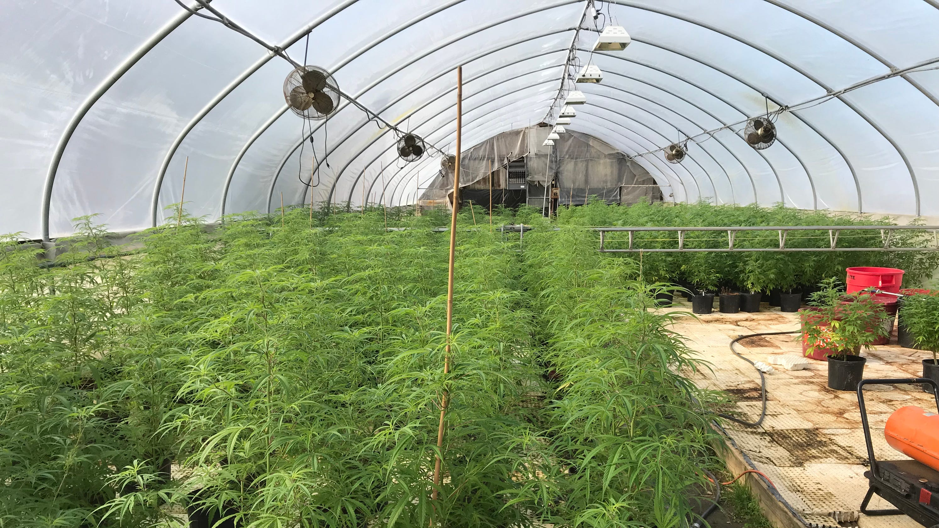 Hemp 'gold rush' can grow opportunity for low-income assistance