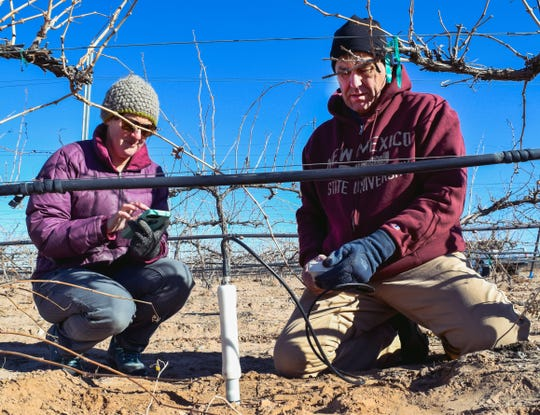 Gil Giese, New Mexico State University Extension viticulturist, right, and Miranda Kersten, senior program specialist, calibrate a frequency domain reflectometry probe on Dec. 15, 2018 at the Santa Ana Pueblo vineyard.