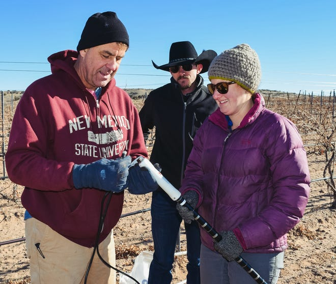 Gil Giese, left, New Mexico State University Extension viticulturist specialist, and Miranda Kersten, senior program specialist, install a probe Dec. 15, 2018 to measure moisture at the Santa Ana Pueblo vineyard.