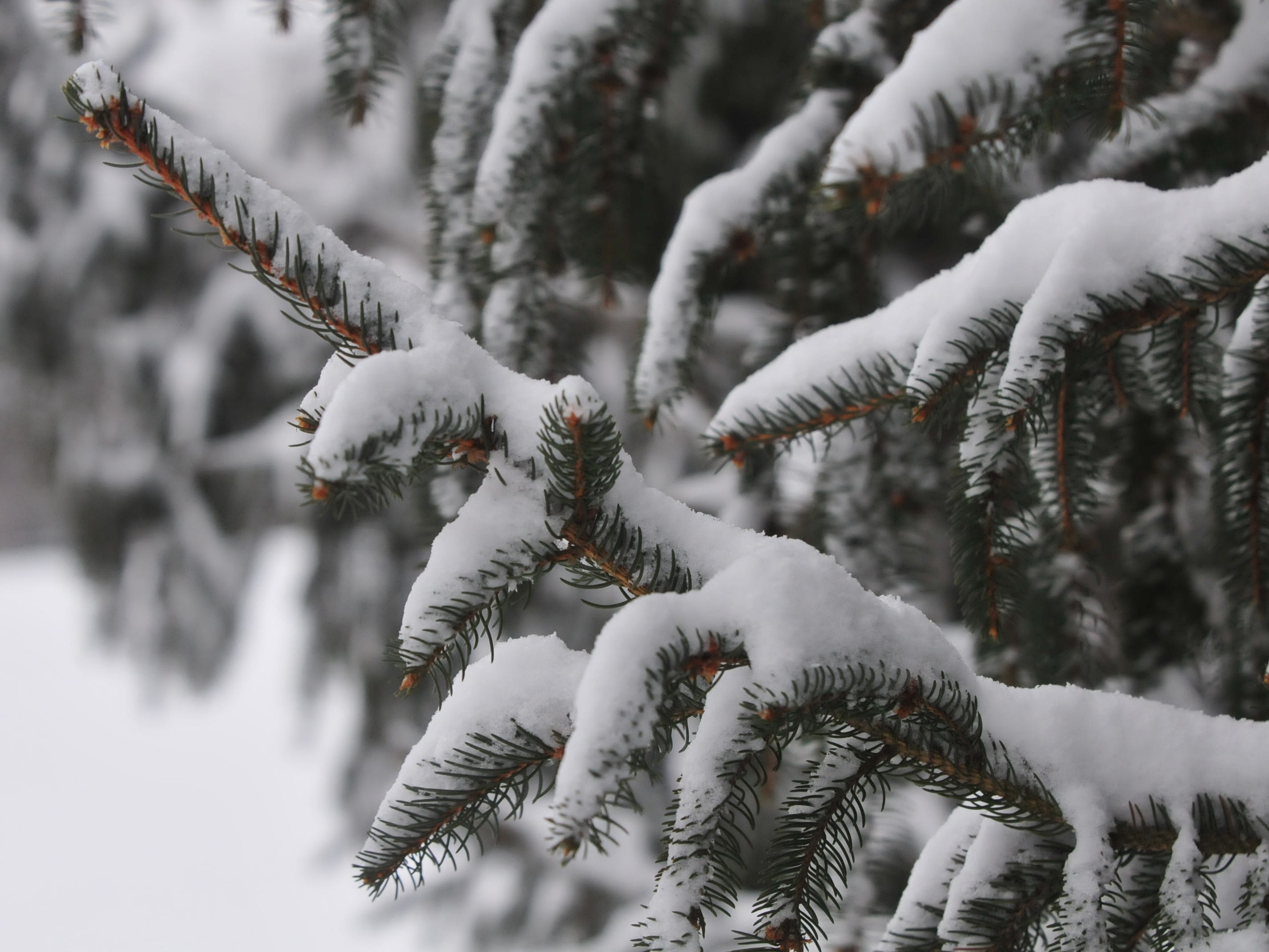 Snow coated trees Friday at Glen Miller Park.