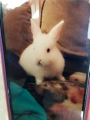 At about 10:30 a.m., Tulare County Sherrif Department deputies found a 4-month-old pet rabbit named Bunny dead after responding to reports of an argument at a Goshen-area home.