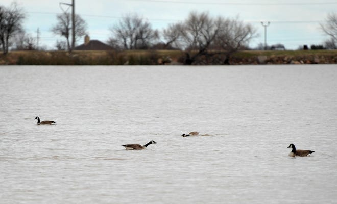 The city of Iowa Park will be stocking Lake Gordon with adult-size channel catfish Thursday and temporarily closing the lake to fishing in preparation for the annual Fish Fest.