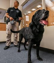 "Tank, a Guam Police Department drug detecting labrador retriever, stands alert and ready with his canine handler, Officer Keith Corpuz, during a Guam Public Library System's ""Saturday Story Hour"" presentation at the Nieves M. Flores Memorial Library in Hagåtña on Saturday, Feb. 2, 2019."
