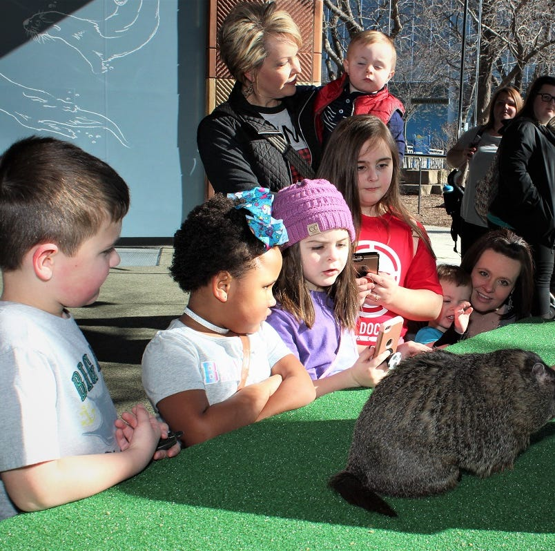 More winter? Punxsutawney Phil, East Tennessee groundhog cast conflicting predictions