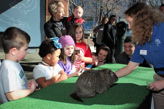 Chattanooga Chuck fans gather around the East Tennessee groundhog to hear his 2019 prediction at the Tennessee Aquarium Saturday morning.