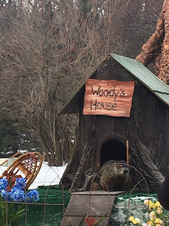 Woody, a female groundhog, did not see her shadow Saturday Feb. 2, 2019 during a Groundhog Day event at the Howell Nature Center. By not seeing her shadow, Woody predicts winter will end six weeks early.