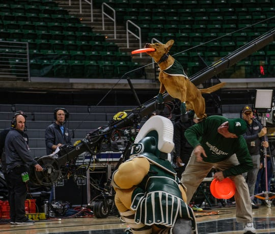 Zeke the wonder Dog performs during the ESPN College GameDay at the Breslin Center Saturday, Feb. 2, 2019.
