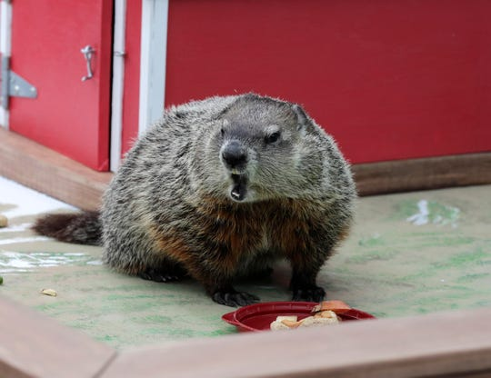 Gordy predicts an early spring; hold him to it at the Milwaukee County Zoo's Family Free Day Saturday.
