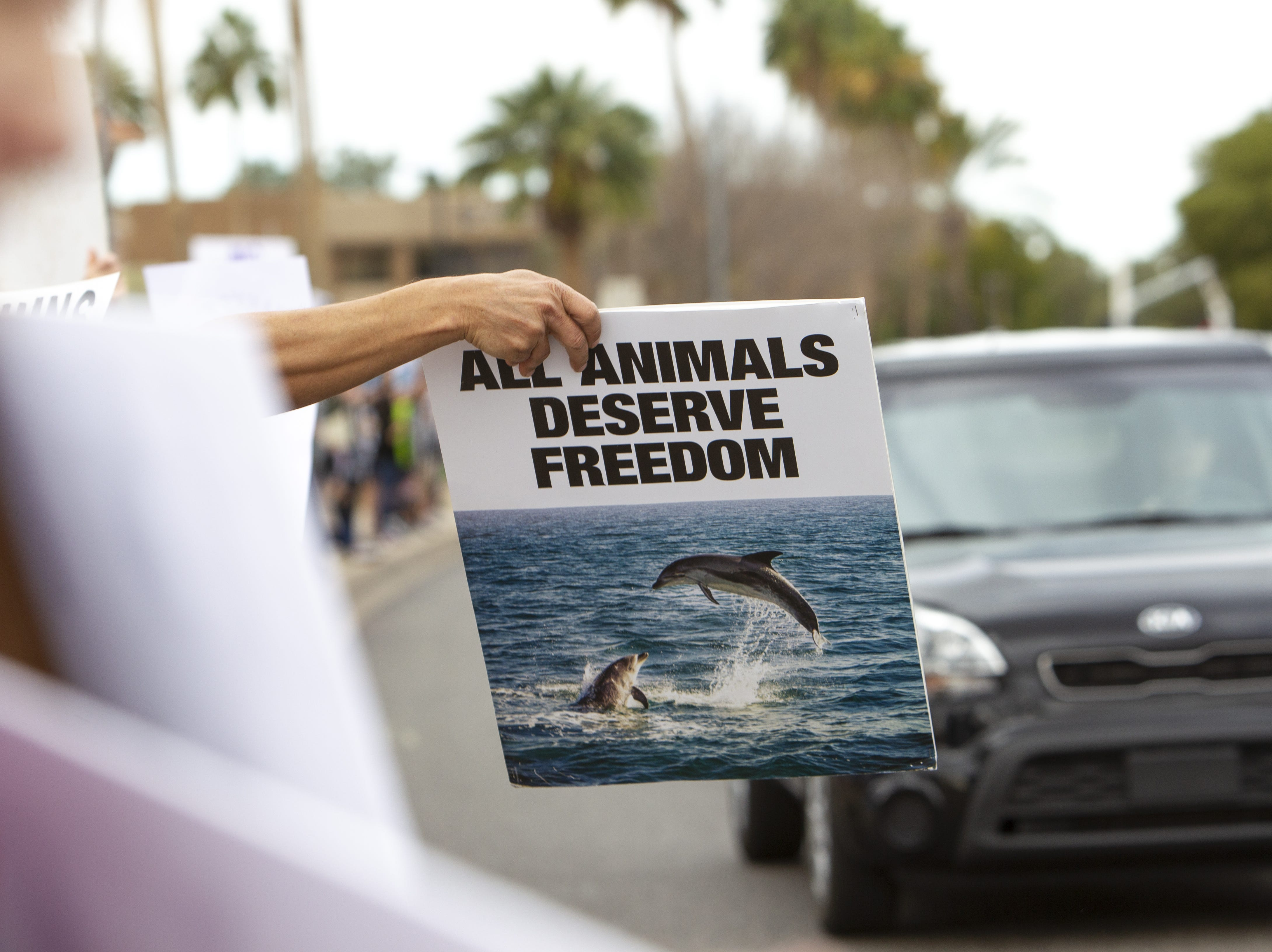 Dolphinaris protesters wave signs at traffic at the intersection of E. Via de Ventura and N. Pima Road in Scottsdale on Feb. 2, 2019.