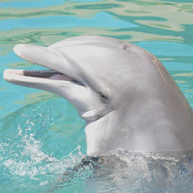 Dolphinaris Arizona weighs future uses. One thing is clear, no animals will be involved