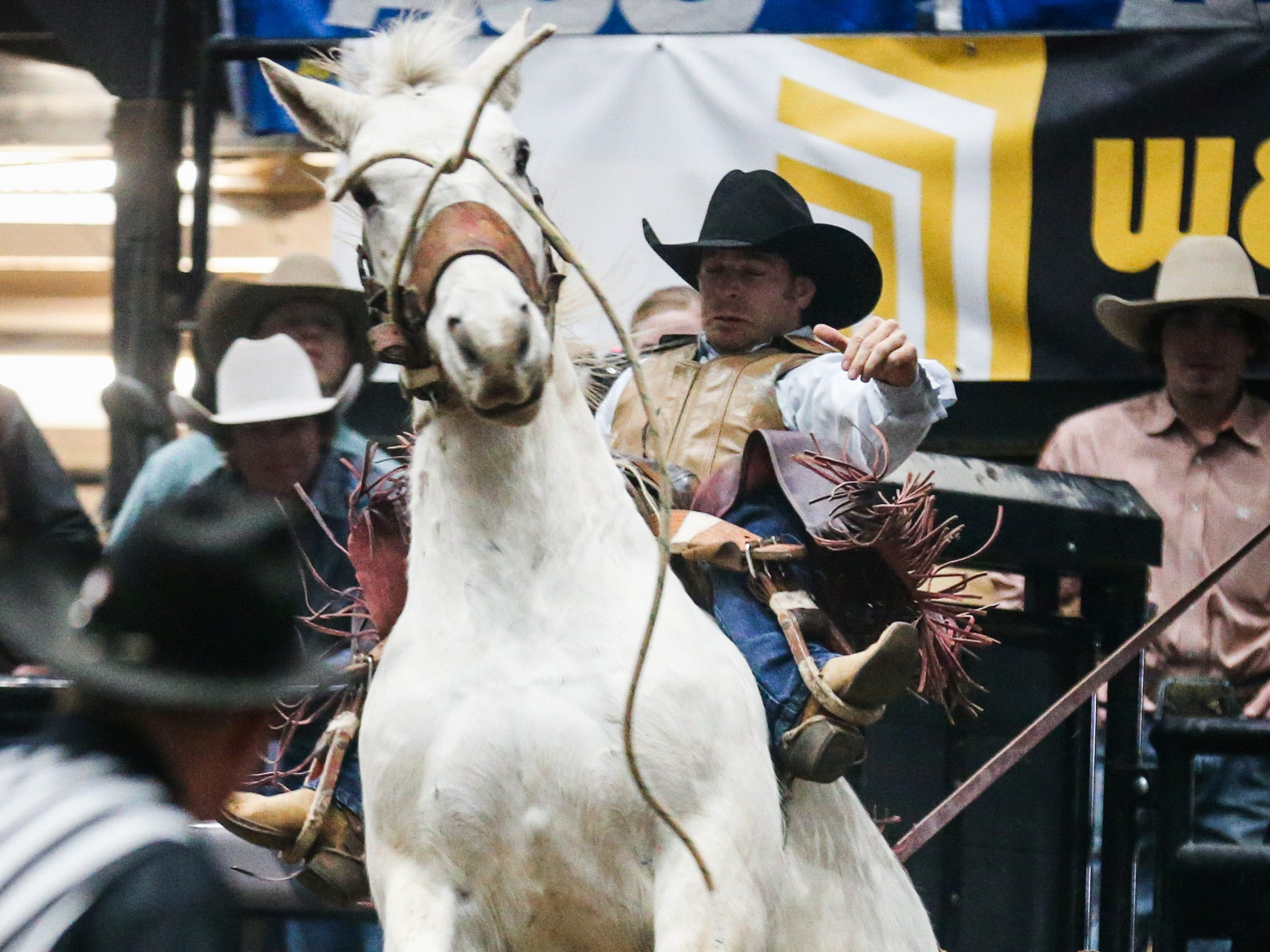 Aaron Life comes out of the chute on bronc named Another Grey during the 2nd performance of the San Angelo Stock Show & Rodeo  Saturday, Feb. 2, 2019, at Foster Communications Coliseum.