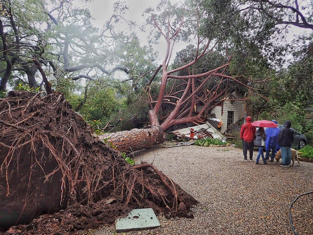 A large stone pine tree believed to be 100 years old came down on a house in Santa Barbara Saturday morning as a storm drenched the region.