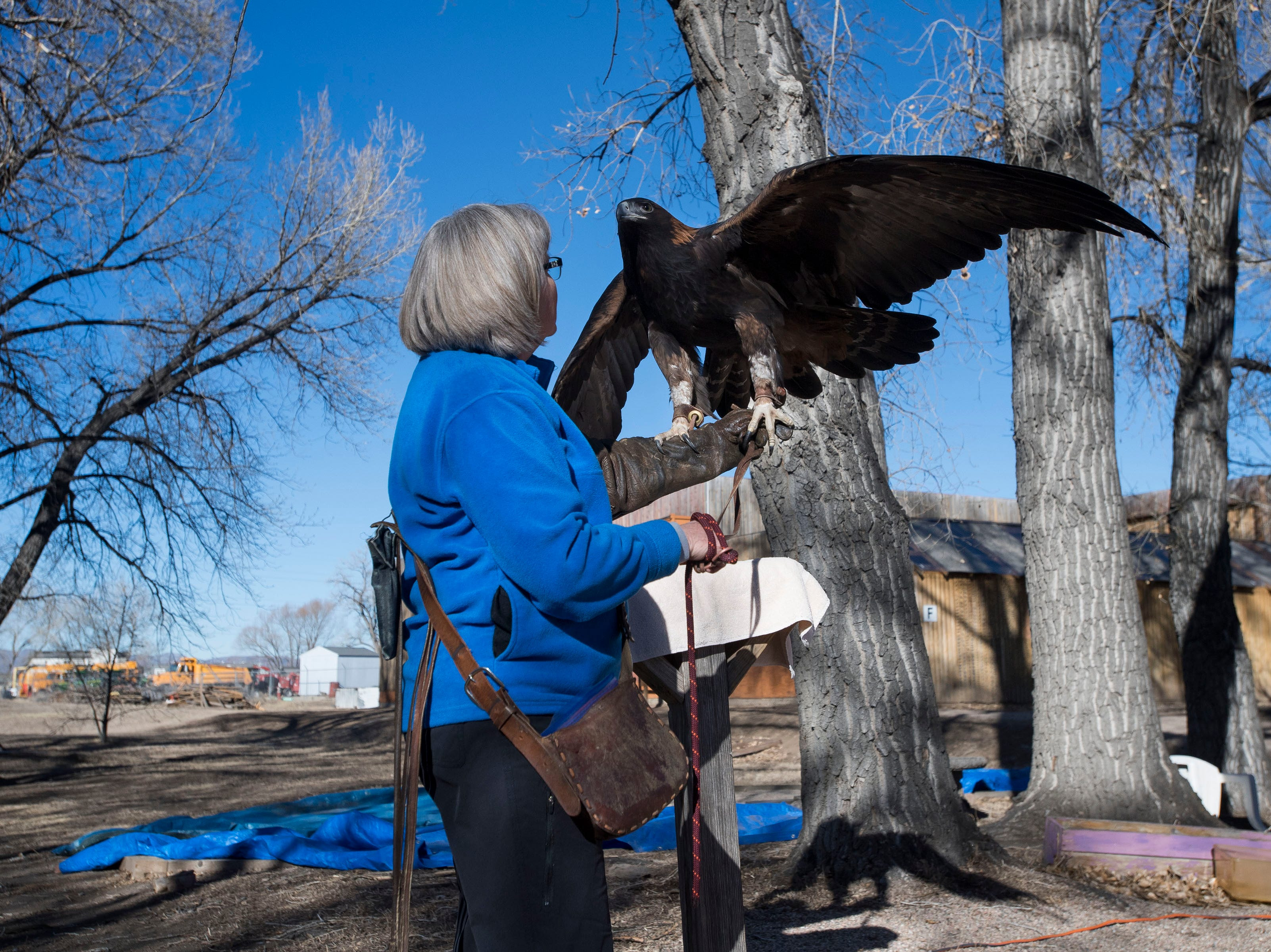 Handler Heidi Lyons holds an educational golden eagle while giving the raptor some time outside on Friday, Feb. 1, 2019, at the Rocky Mountain Raptor Program in Fort Collins, Colo.