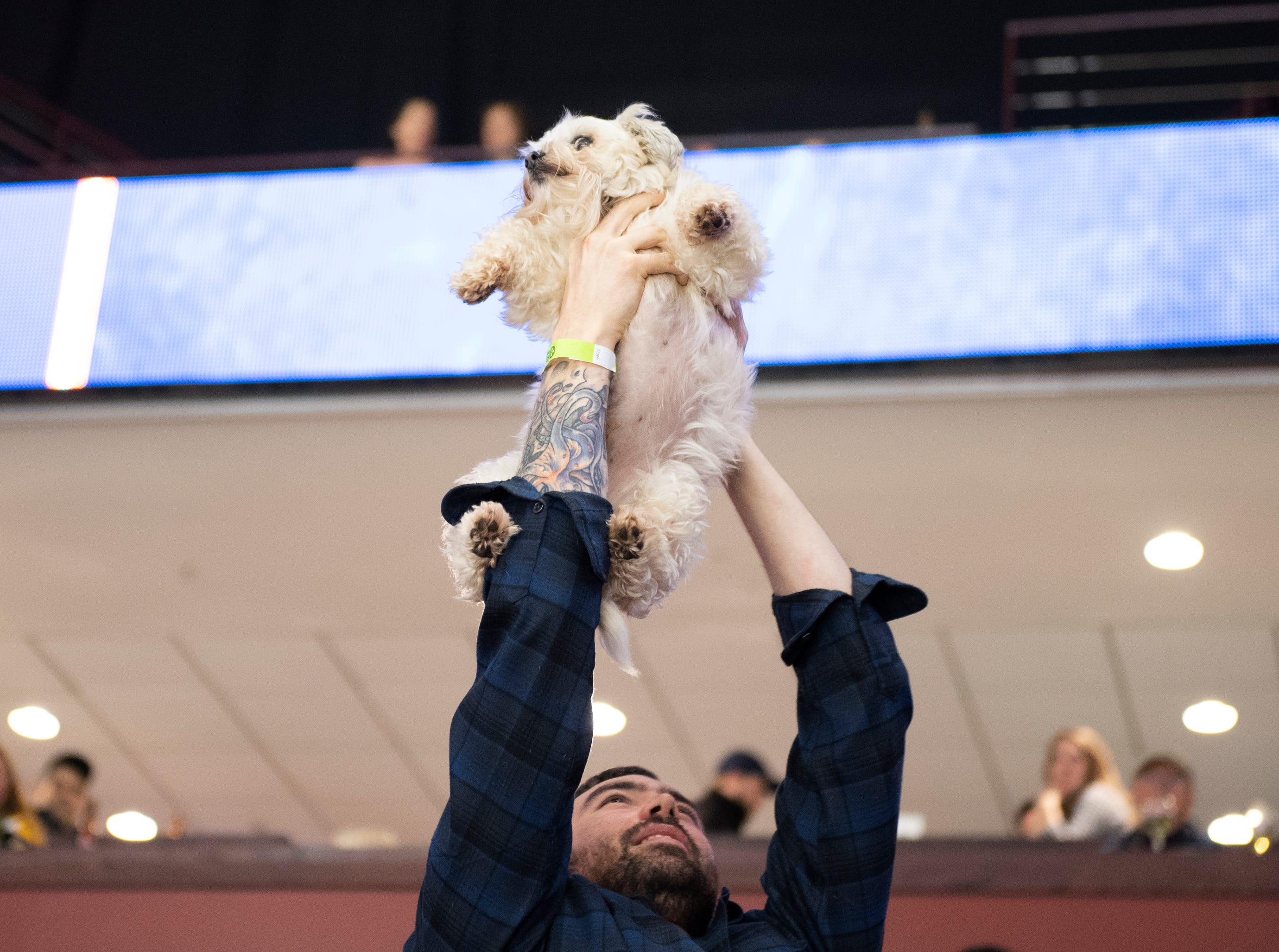 Tyler Bryant holds up his dog Beast during the Greenville Swamp Rabbits game against the Florida Everblades Saturday, Feb. 2, 2019. Saturday was Pucks N' Paws night at Bon Secours Wellness Arena.