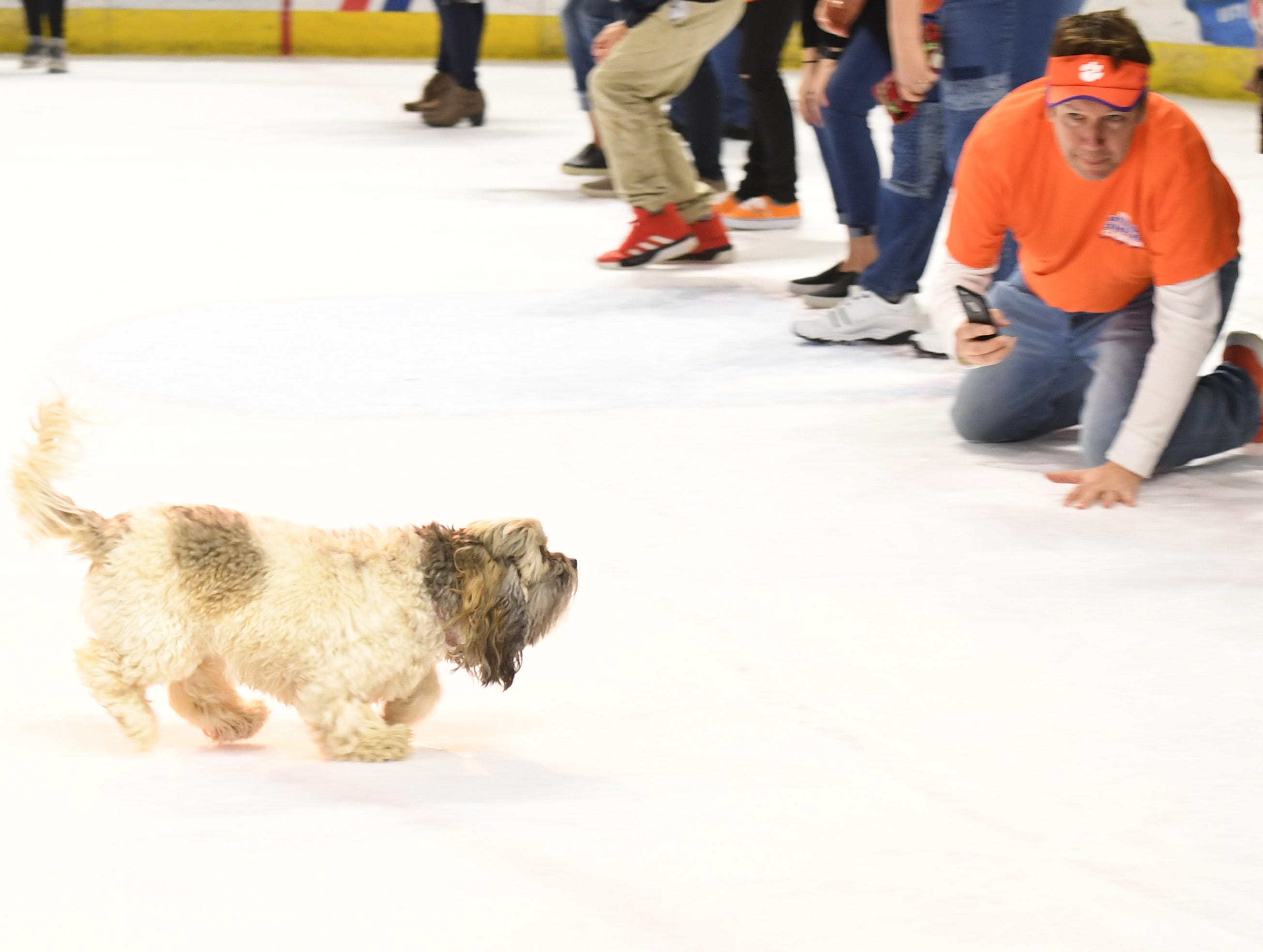 Bella makes it to the finish line winning the dog race during intermission of the Greenville Swamp Rabbits game against the Florida Everblades Saturday, Feb. 2, 2019. Saturday was Pucks N' Paws night at Bon Secours Wellness Arena.
