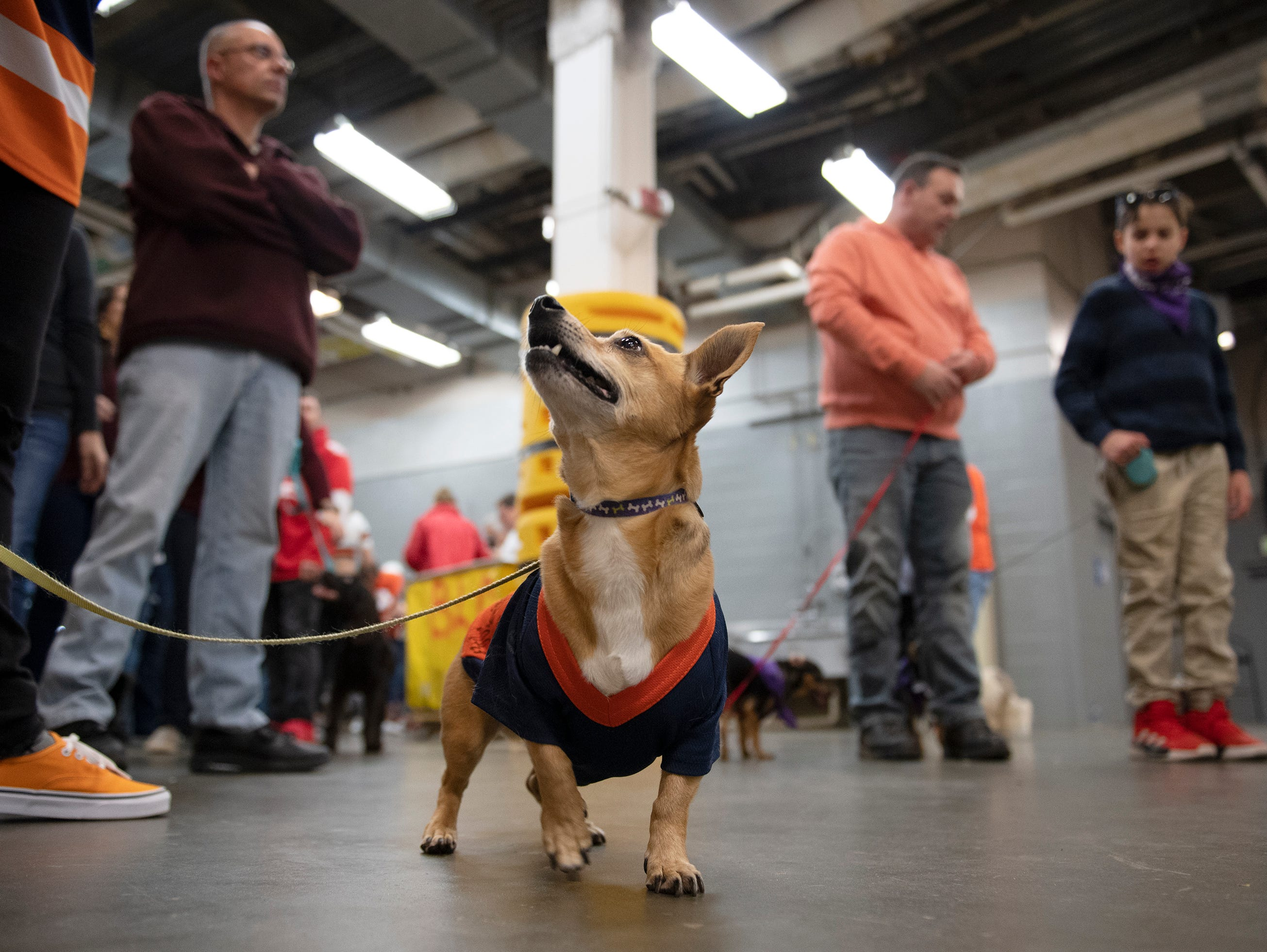 Meatbol waits with Rebecca DaSilva for the start of a dog race during intermission at the Greenville Swamp Rabbits game against the Florida Everblades at Bon Secours Wellness Arena Saturday, Feb. 2, 2019.