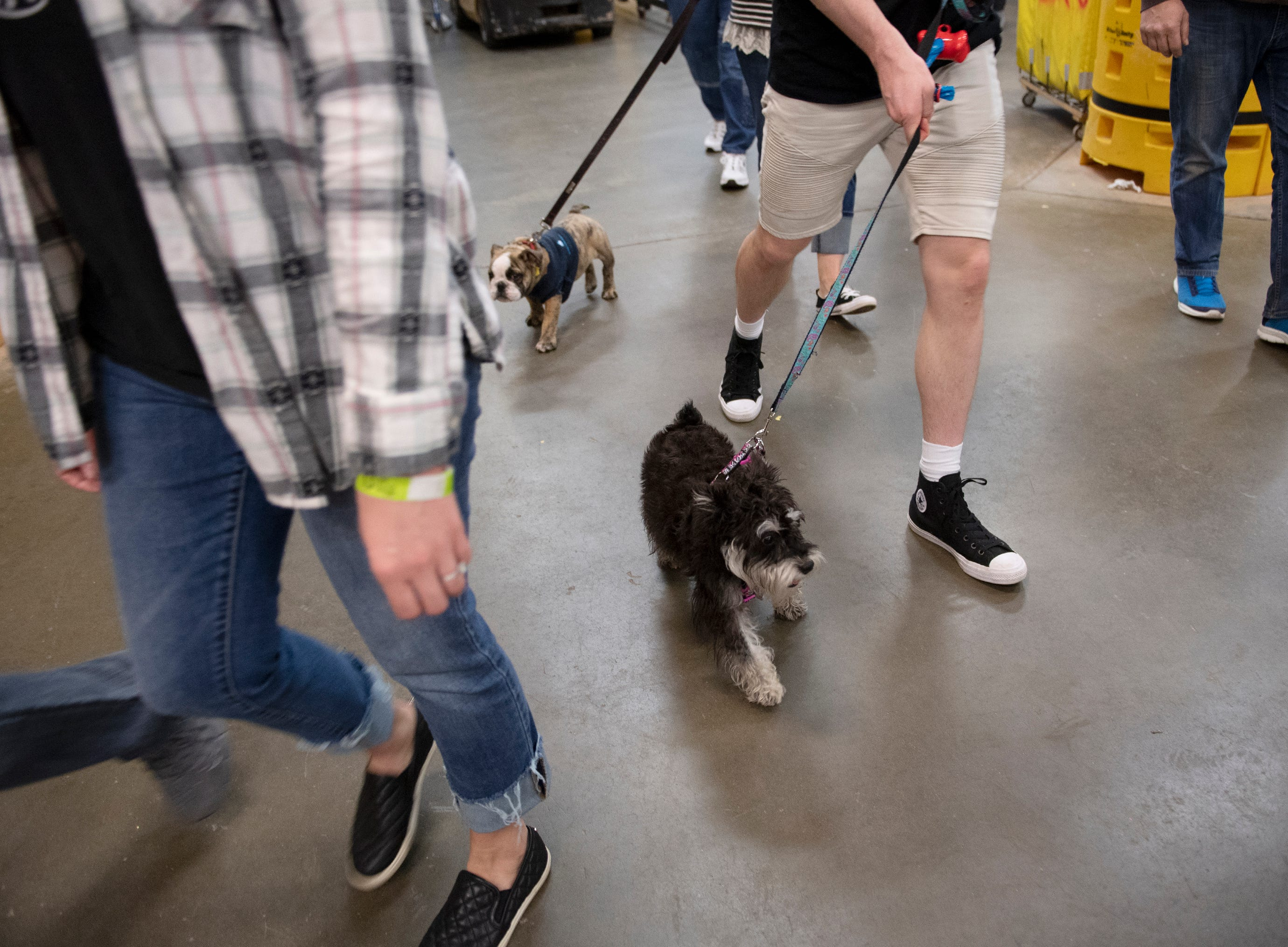 Greenville Swamp Rabbits patrons brought their dogs to the game against the Florida Everblades for Pucks N' Paws night at Bon Secours Wellness Arena Saturday, Feb. 2, 2019.