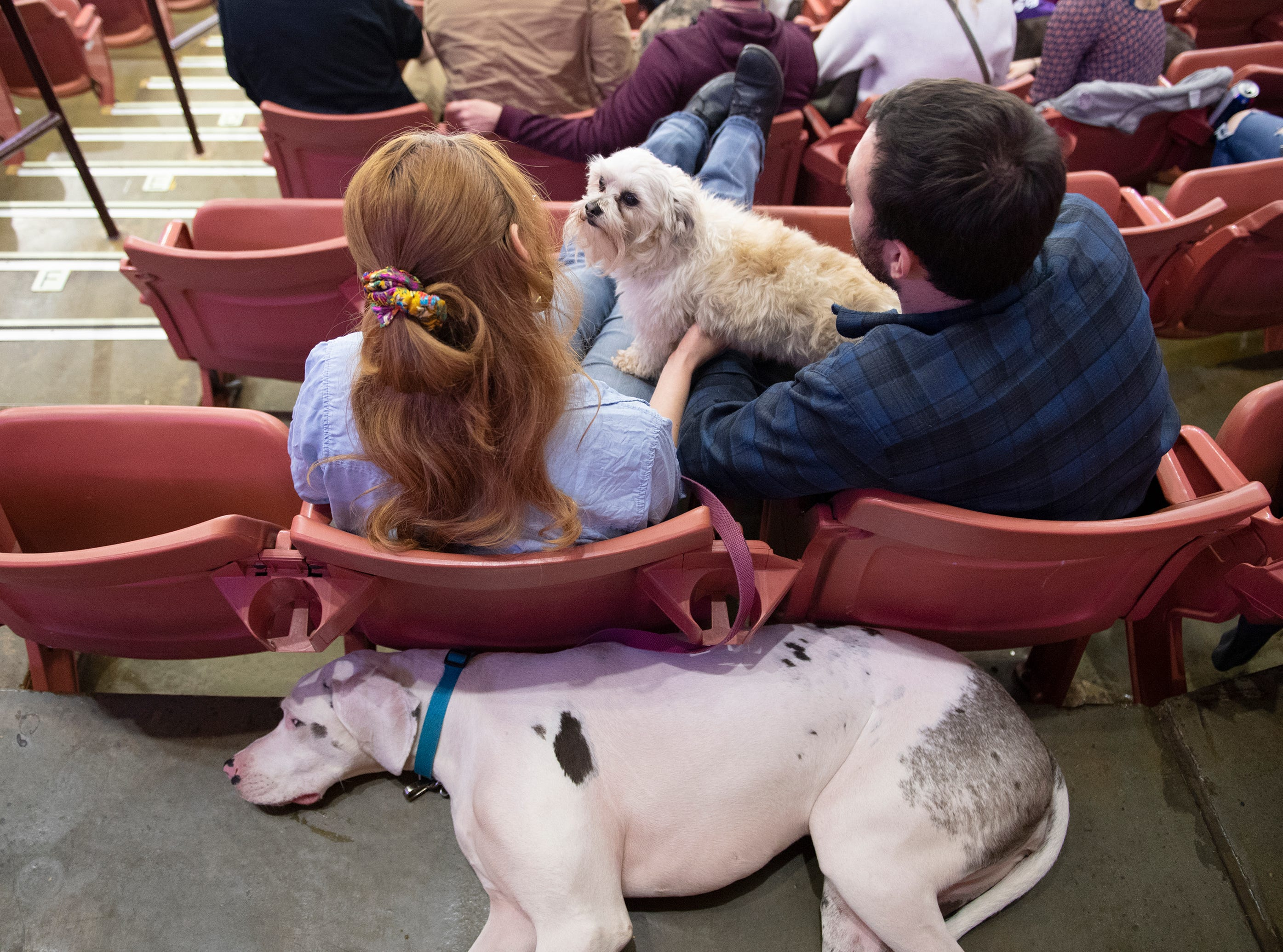 Beast sits with Sami Bruce and Tyler Bryant while Anna rests behind them during the Greenville Swamp Rabbits game against the Florida Everblades Saturday, Feb. 2, 2019. Saturday was Pucks N' Paws night at Bon Secours Wellness Arena.