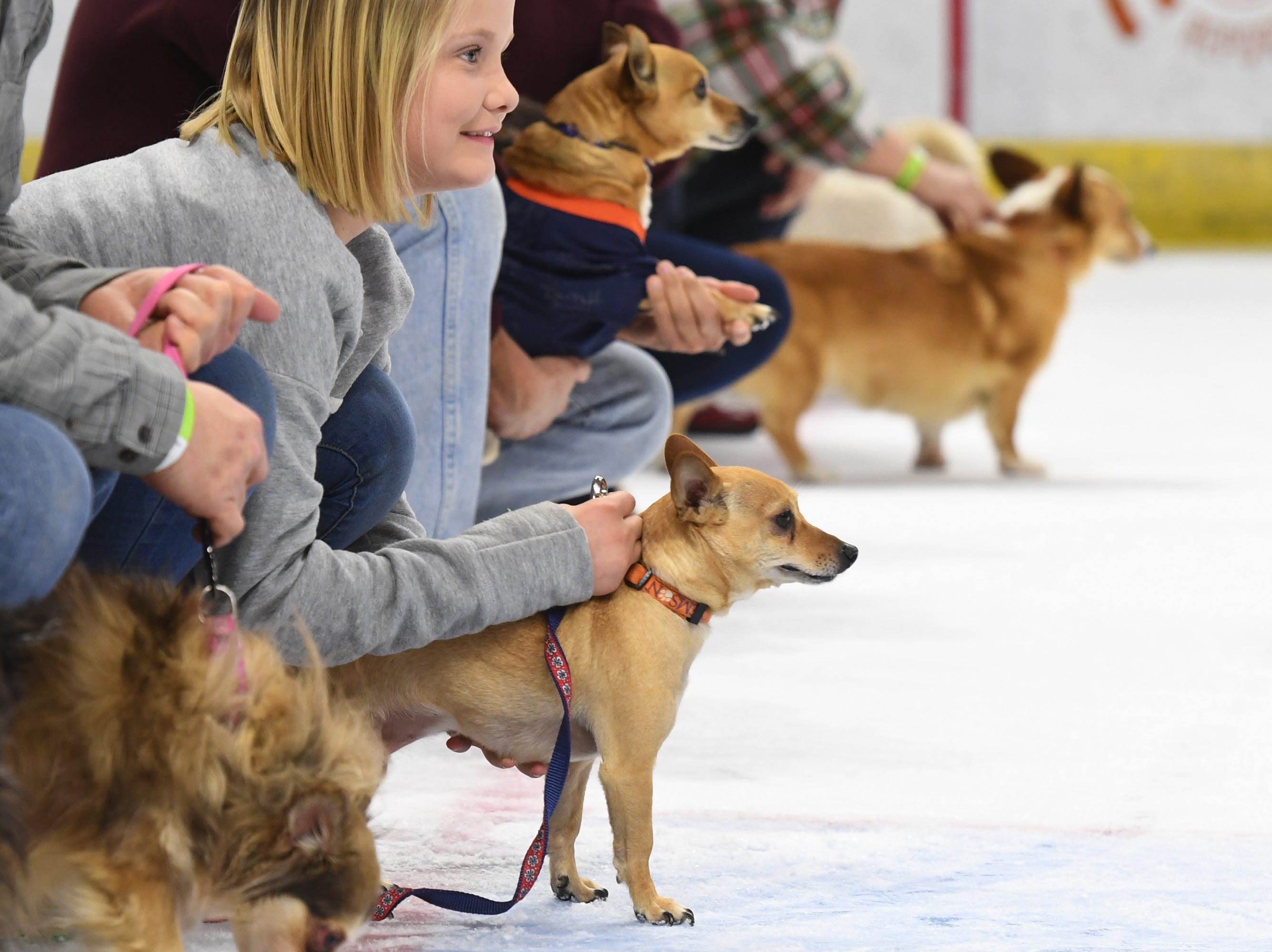 Owners line up their dogs to race on the ice at intermission of the Greenville Swamp Rabbits game against the Florida Everblades Saturday, Feb. 2, 2019. Saturday was Pucks N' Paws night at Bon Secours Wellness Arena.