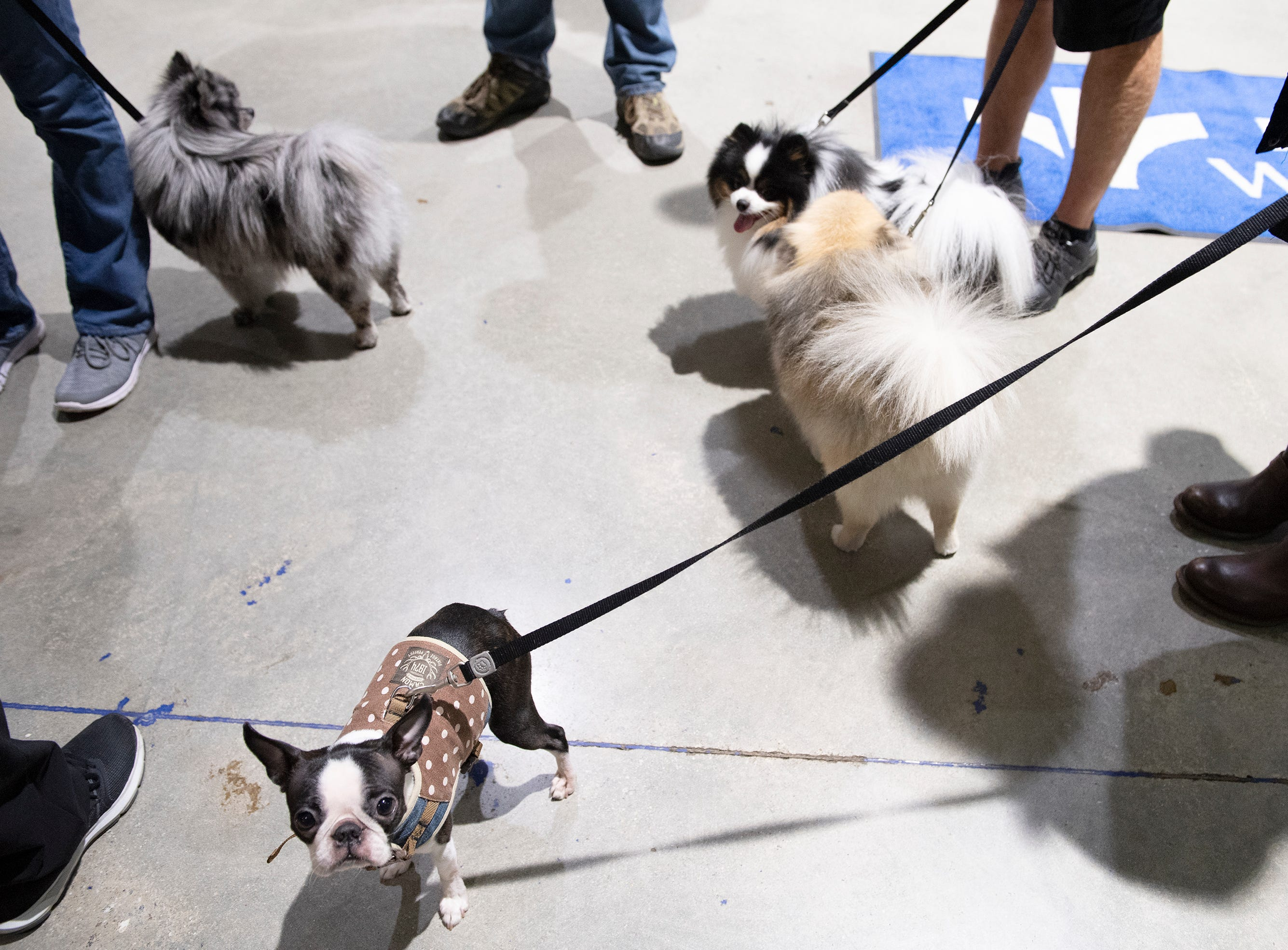 Piper (bottom), Bandit, Smokey and Diva attend Pucks N' Paws night at Bon Secours Wellness Arena during the Greenville Swamp Rabbits game against the Florida Everblades Saturday, Feb. 2, 2019.