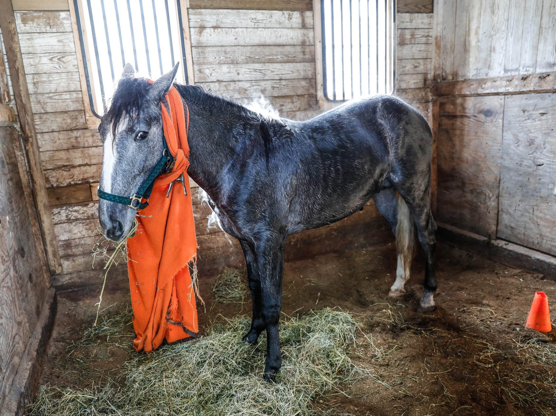 Gringo, a harness racing horse, steams after a bath on a near sixty-degree day inside the Mark P'Pool stables at the Indiana State Fairgrounds on Feb. 3, 2019. The warm temperatures were a welcome reprieve after days of sub-zero weather.