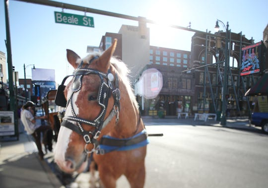 A horse carriage awaits its next passengers near Beale Street.