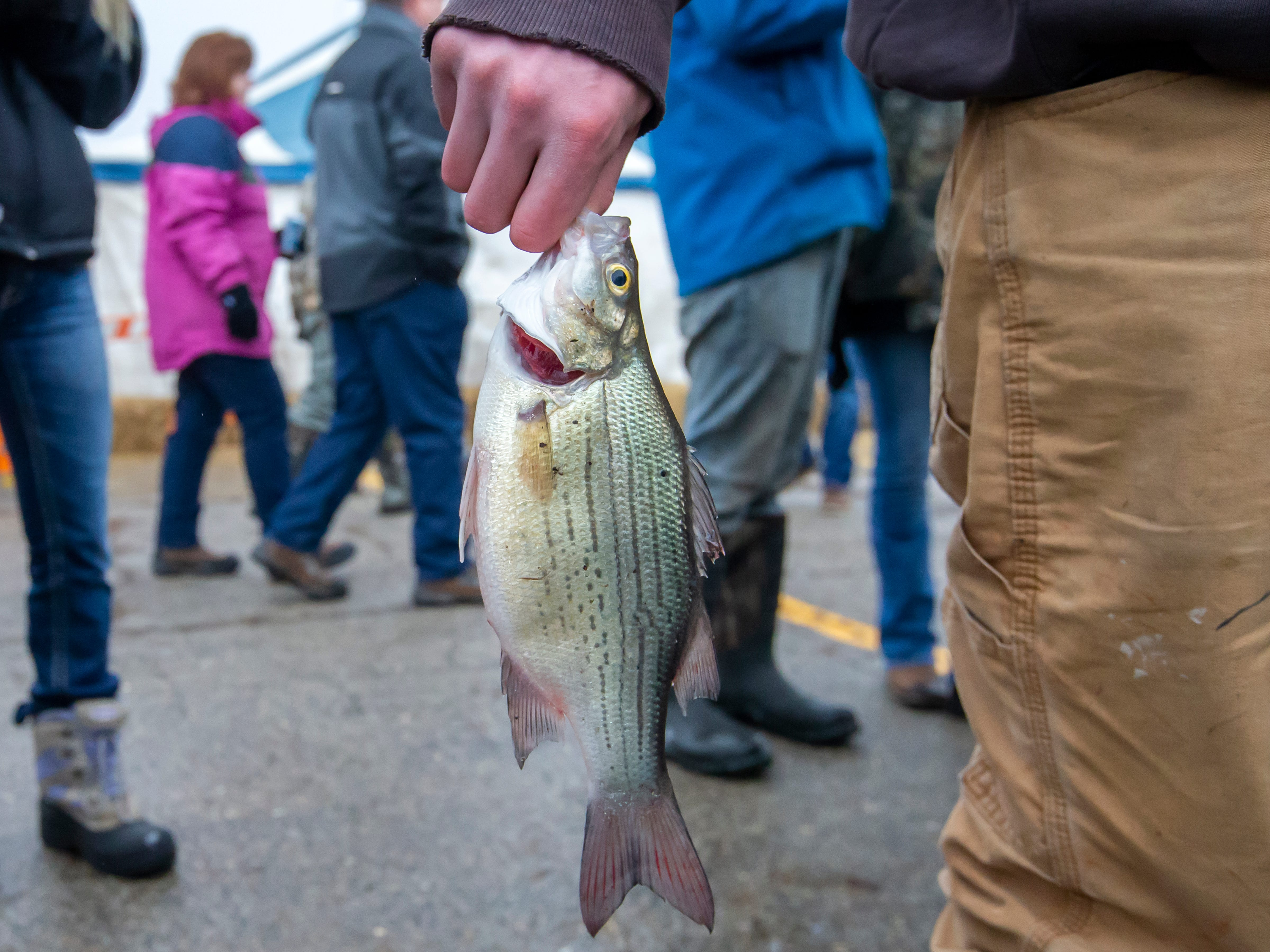 Garrick Garvens holds his fish to enter into the contest in the Otter Street Fishing Club Winter Fisheree at Miller's Bay in Menominee Park on Saturday, Feb. 2, 2019.
