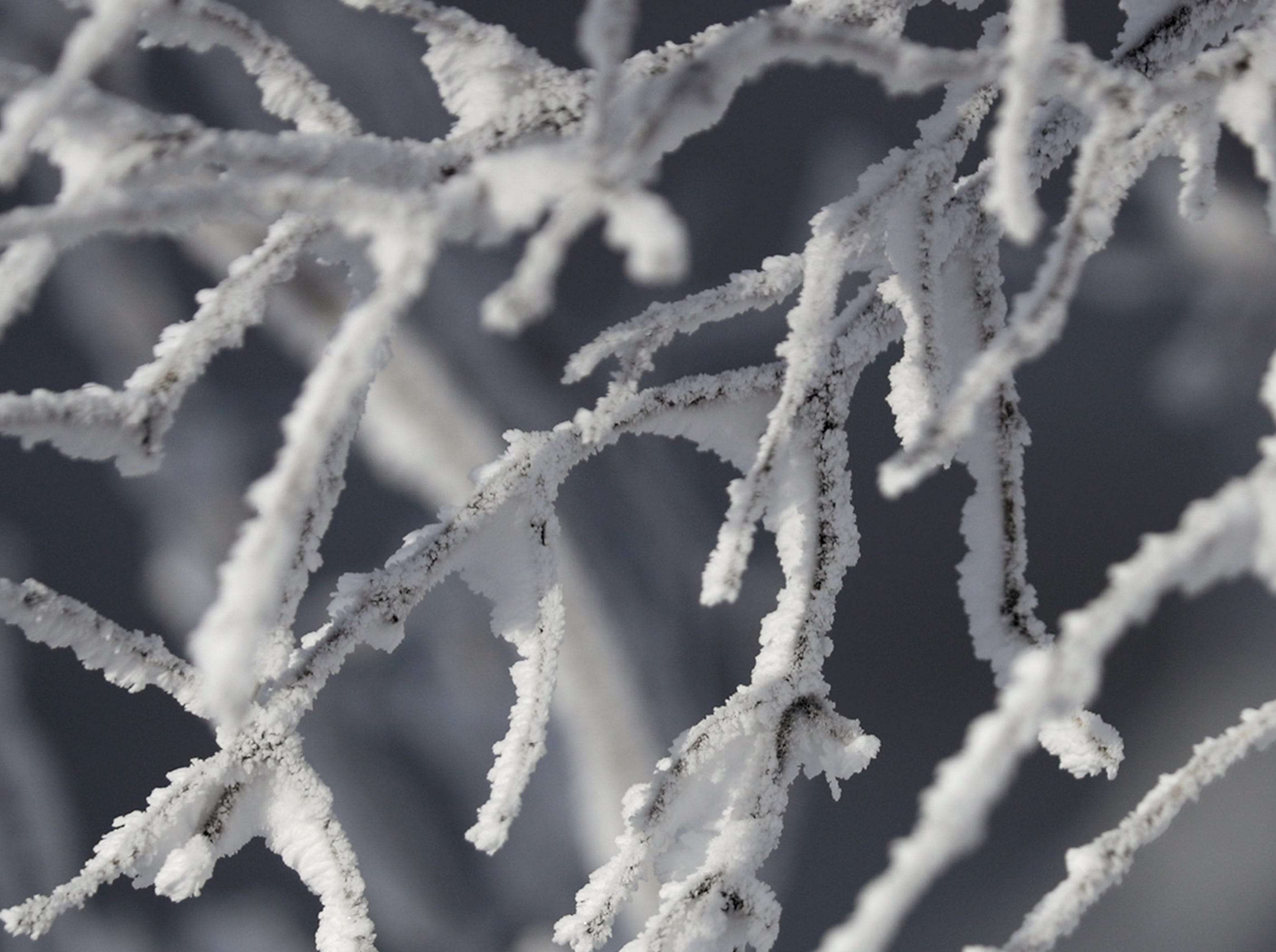Frost laden branches during a polar vortex that brought extremely cold temperatures and dangerous wind chill temperatures on Wednesday, January 30, 2019, in Kaukauna, Wis.