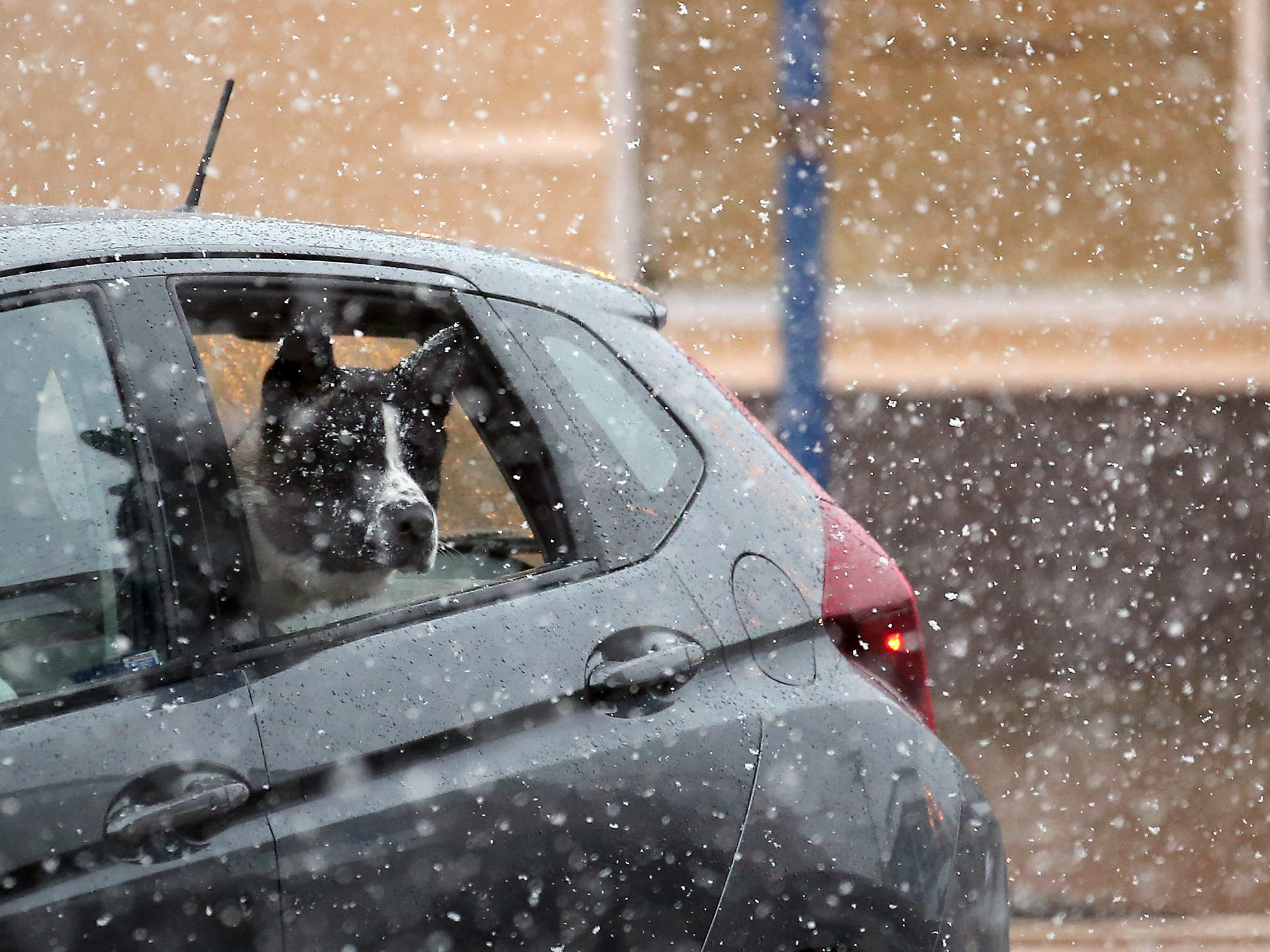 A dog sticks its head out the window as a car travels through the snowstorm in downtown Poulsbo on Sunday, February 3, 2019.