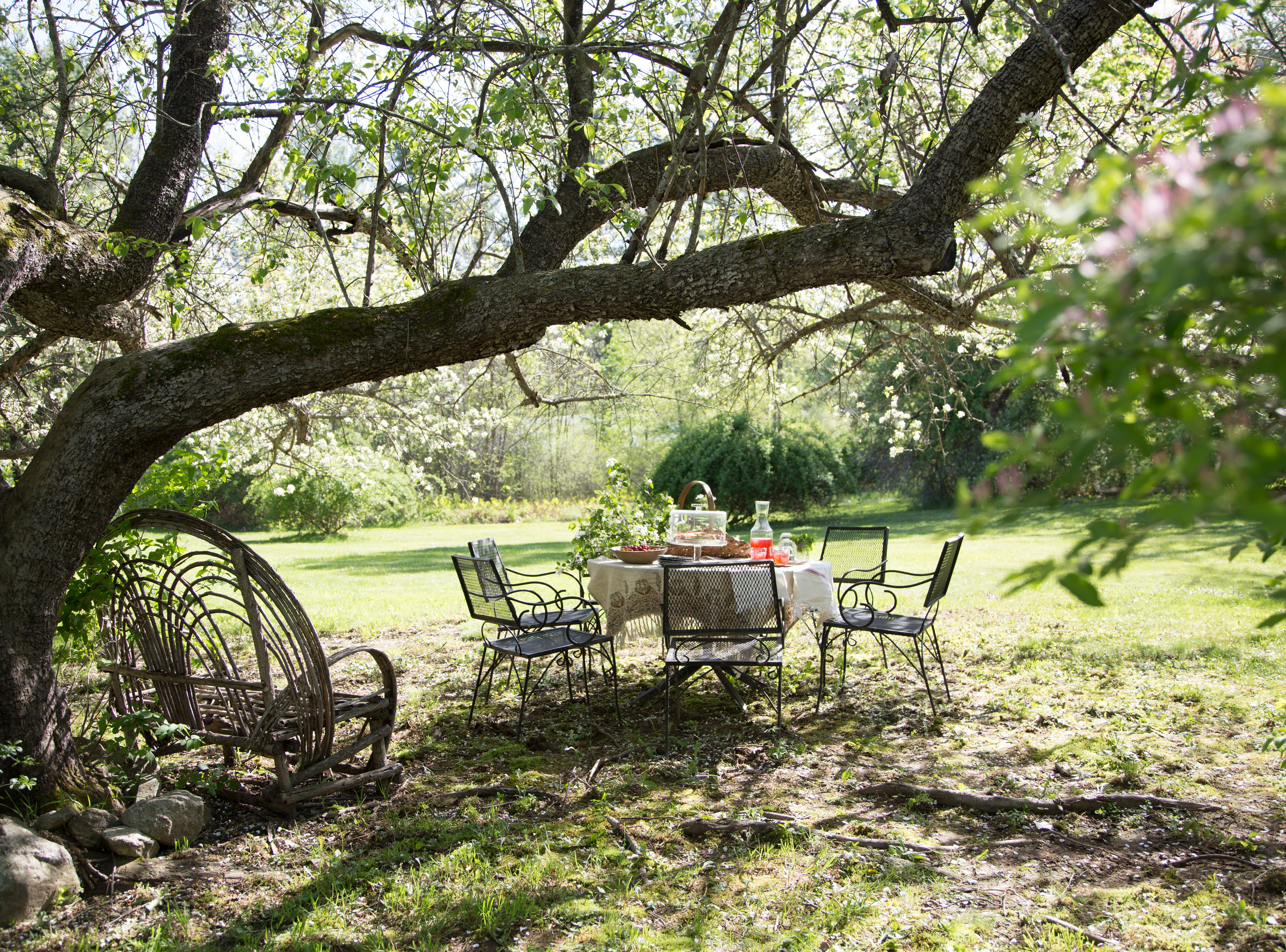 The thick branches of a 200-year-old apple tree reach wide to embrace and shelter a delightful spot for an intimate gathering.