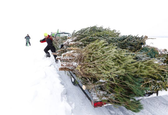 Scott Blanck and Mitch White of Van Dyne erect old pine trees Friday, Feb. 1, 2019, along an ice road the Friendship Fishing Club maintains on Lake Winnebago during sturgeon spearing season. The trees allow the road to be more visible.