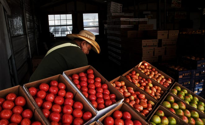 David Flores shifts a display of Immokalee tomatoes at the Immokalee Farmers Market earlier this year.