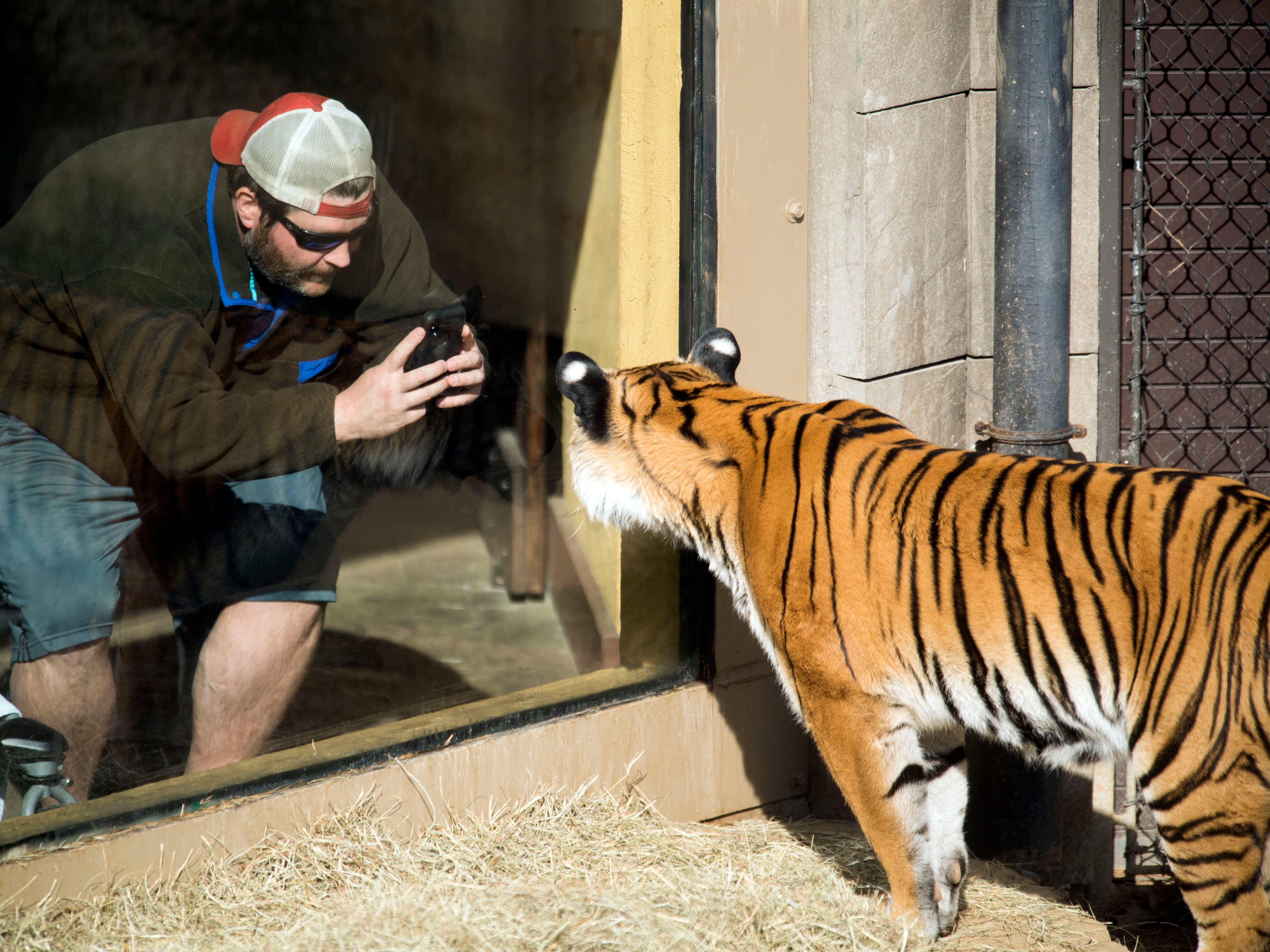 Arya, a Malayan tiger, is photographed at Zoo Knoxville's Tiger Forest habitat on Feb. 3, 2019.
