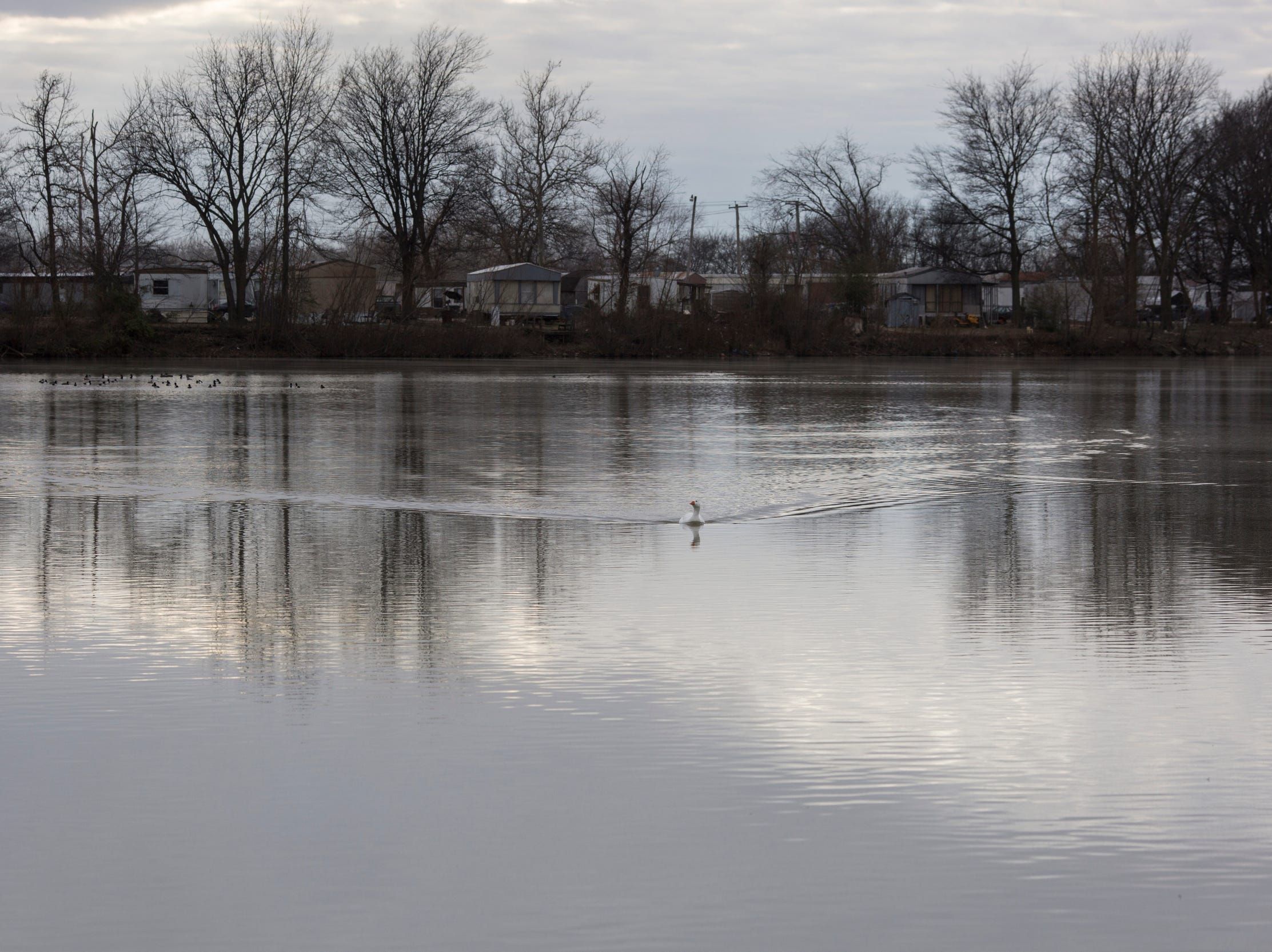 "January 31, 2019 - A goose swims across the lake inside of Lakeshore. The Arkansas Department of Environmental Quality studied a 2014 incident in which more than 10,000 fish in the lake died en masse. Inspectors described the fish kill as the ""likely"" result of a low level of dissolved oxygen in the water."