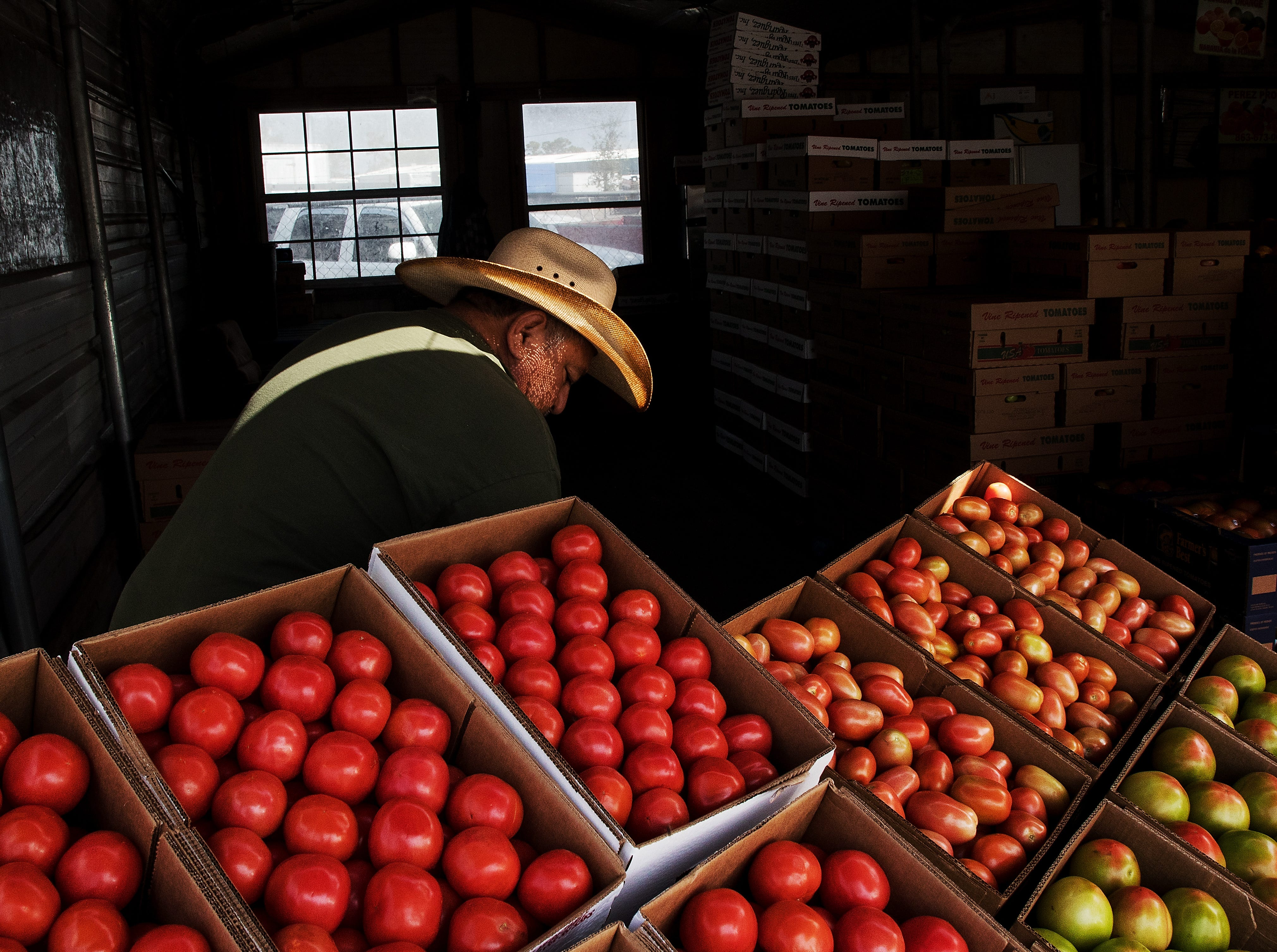 David Flores shifts his display of Immokalee tomatoes at the Farmer's Market in Immokalee on Thursday 1/31/2019.