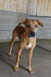 Jackson is about 1 year old and is very outgoing and friendly.