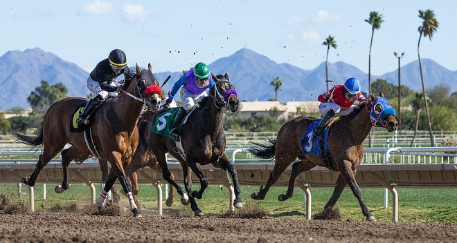 turf paradise live betting rules